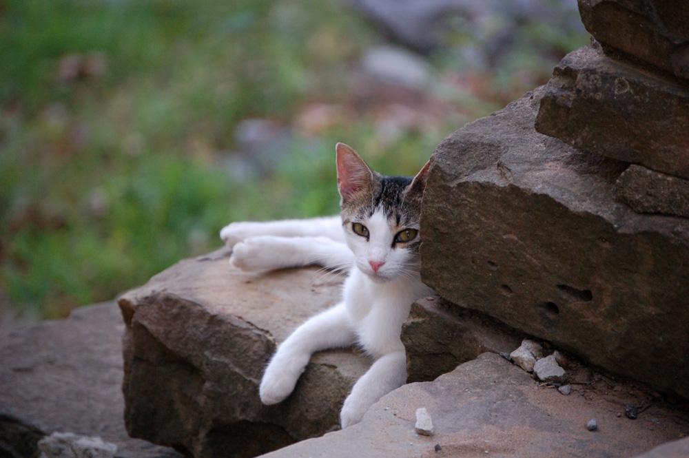 10_cat