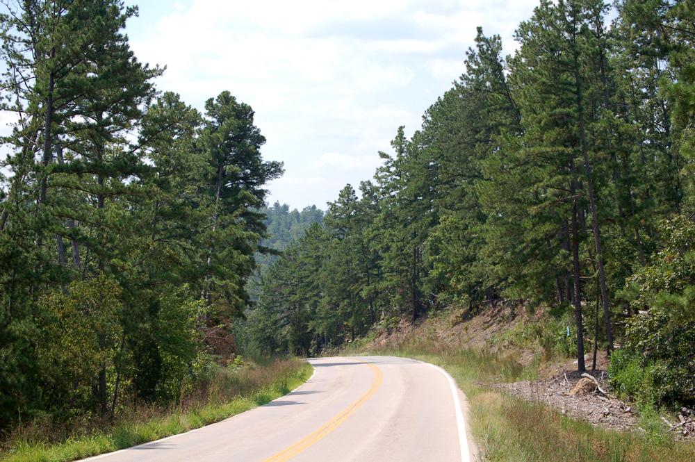11_pines