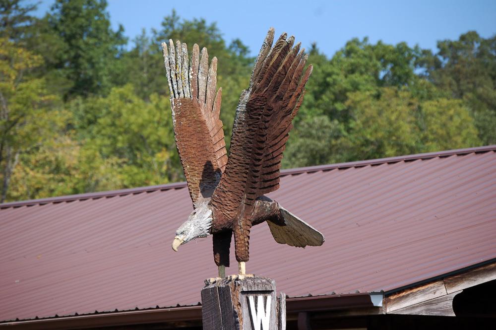 9_eagle