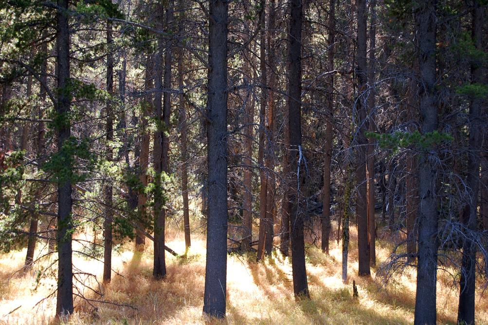 34_trees_1