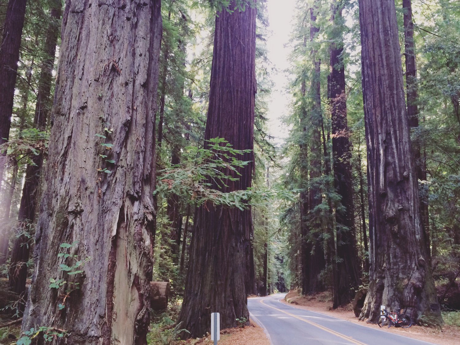 Still on the Avenue of the Giants. I only rode a short section.
