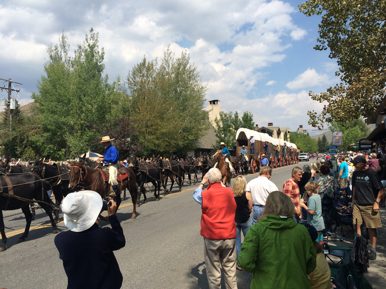 Wagon Days parade. That's a lot of mules.