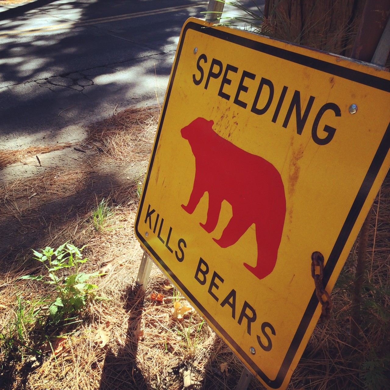 So cut that shit out. Every time you see this sign, it means a bear was hit by car there. :(